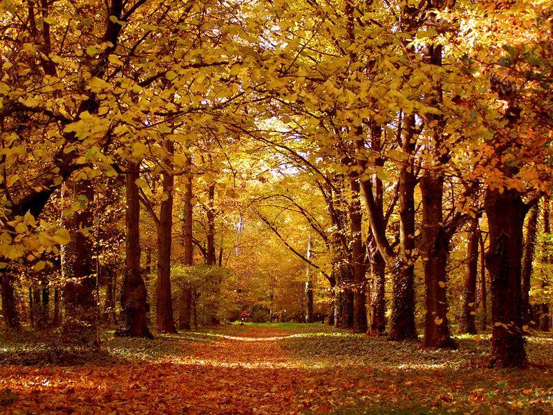 Fondos de pantalla de oto o para recibir windows 10 fall - Descargar autumn leaves ...