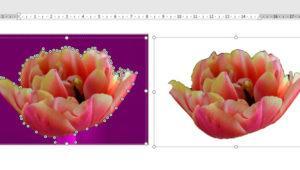 Cómo borrar el fondo de una imagen directamente desde Word o Powerpoint