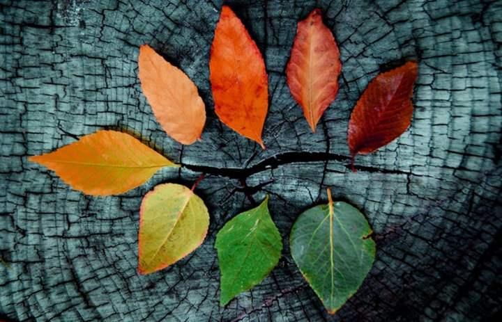 Colección hojas fondo
