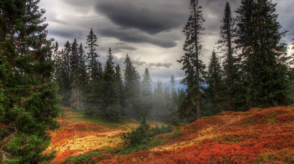 Fondo otoño bosque niebla