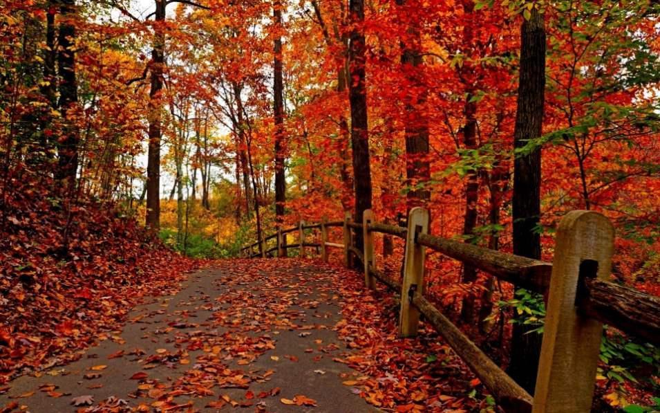 Fondo otoño colores rojos