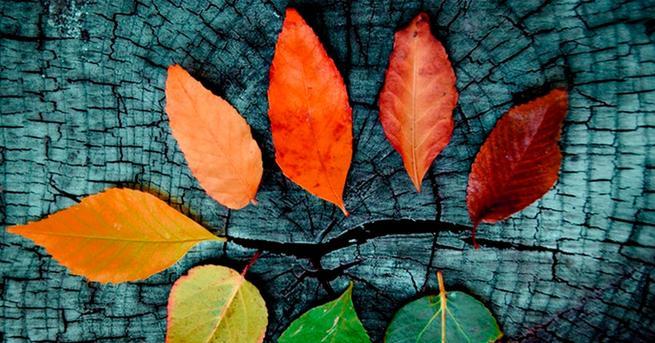 Hojas otoño fondo de pantalla
