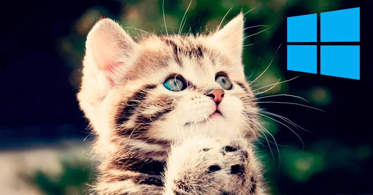 Fondo gatito Windows 10