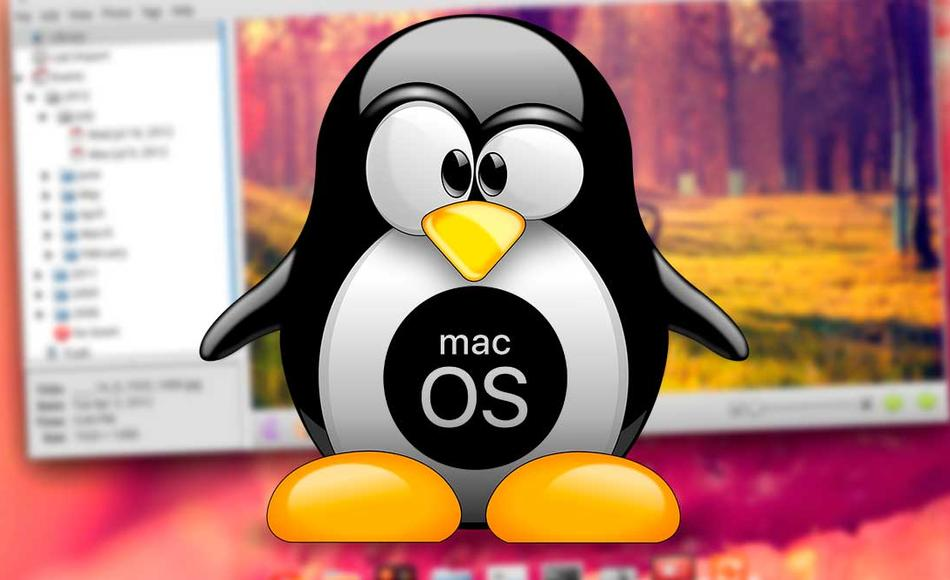 Elementary OS 6.0 beta