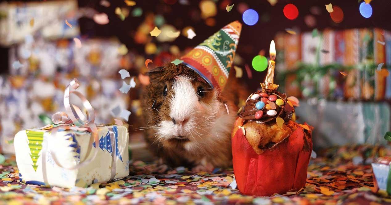 Ratón cumpleaños